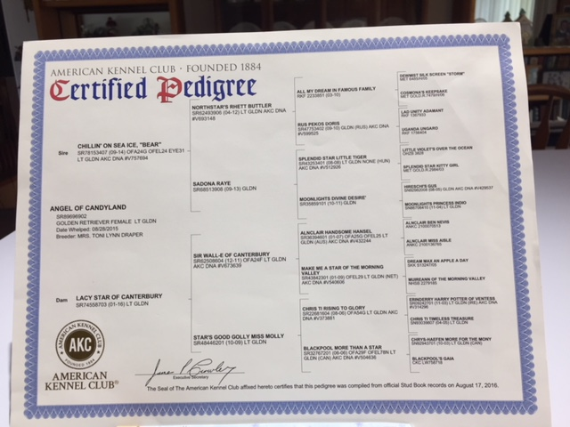 AKC Pedigree & OFA Certifications :: Candyland Retrievers
